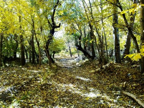 autumn in qalhar